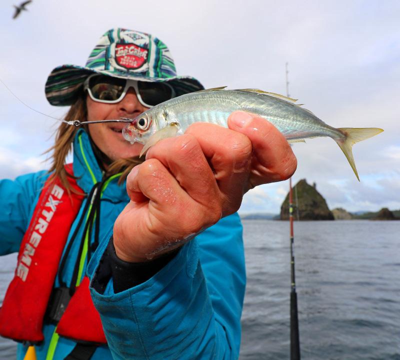 live bait hook up