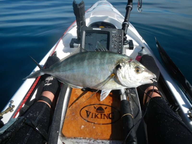 Trevally kayak fishing