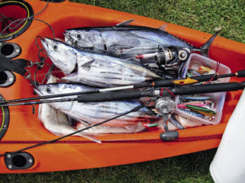 how to catch skipjack tuna nz